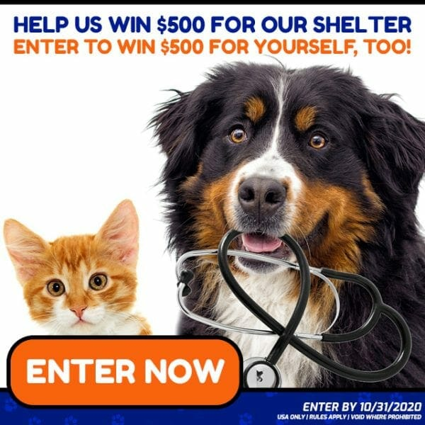 Animal Charity Dog Donation Giveaway