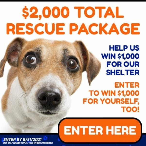 Adopt a Dog Rescue Package