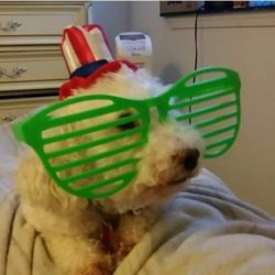 motley puppy mill breeder SPCA rescue monica april 2020 winner