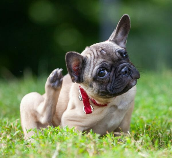 benadryl dosage for dogs - how much benadryl to give a dog