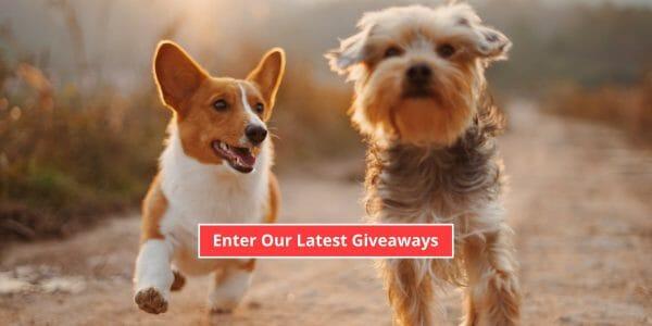 dog giveaways