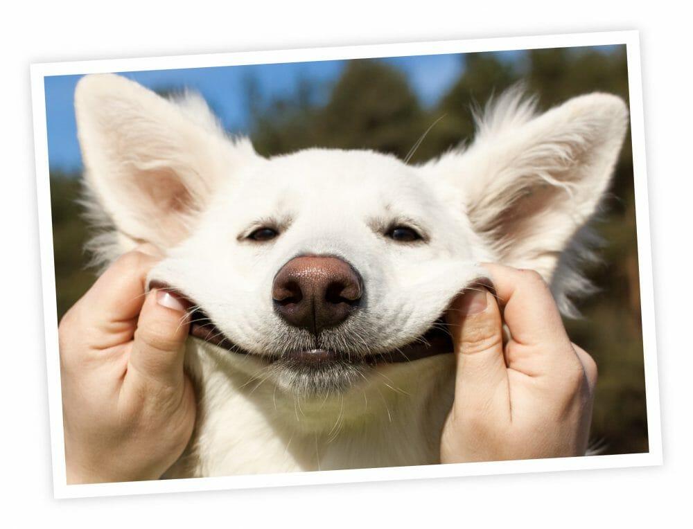 pet rescue donations