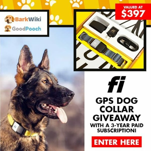fi dog collar - fi smart dog collar