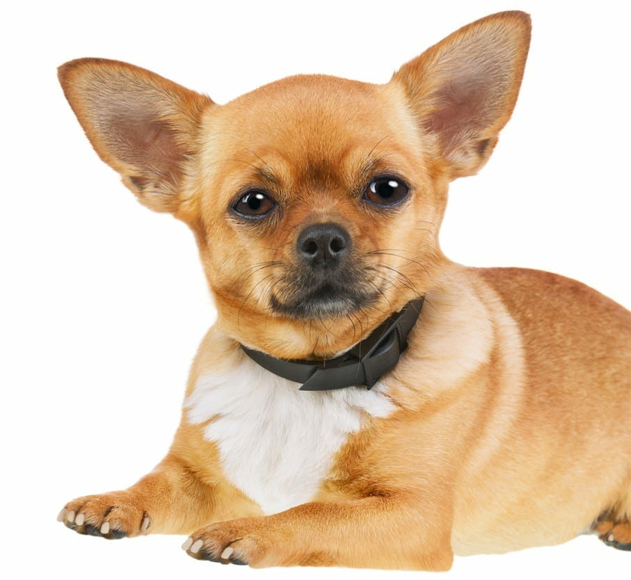 flea collar for dogs - flea collars for dogs