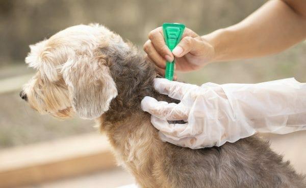 flea treatment for dogs - dog flea medicine
