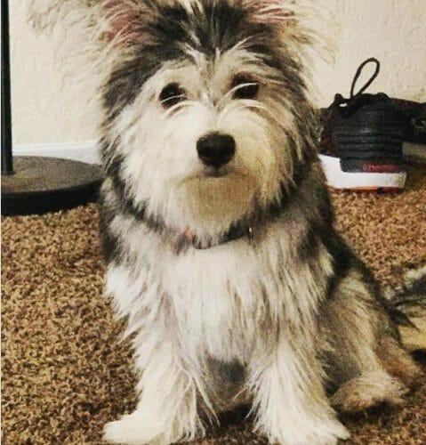 goodpooch female terrier bentley cute dog sep 2020