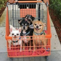 maggie bruno brutus gismo rescue dogs virgie may 2020 winner