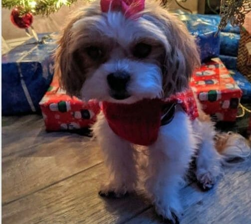 Featured Pet Winner for December 2019 GoodPooch