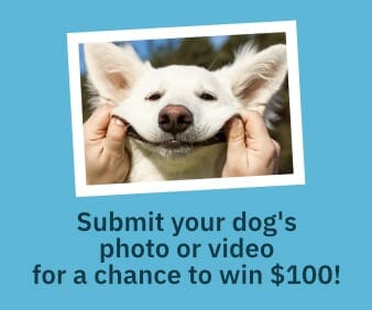submit your dog photo video 1